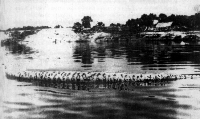 Alleged 35-m Guapore sucuriju gigante carcase floating in Abuna River, 1949