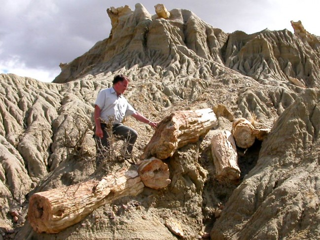 Petrified-wood-3.jpg