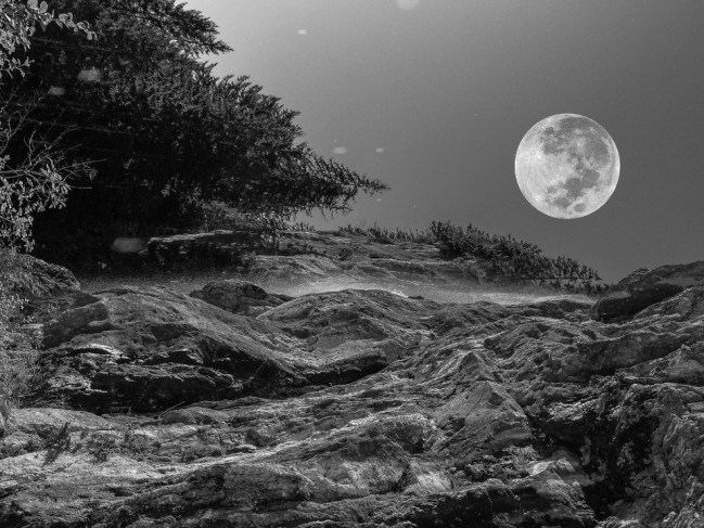 tree-nature-forest-rock-black-and-white-night-1401082-pxhere.com